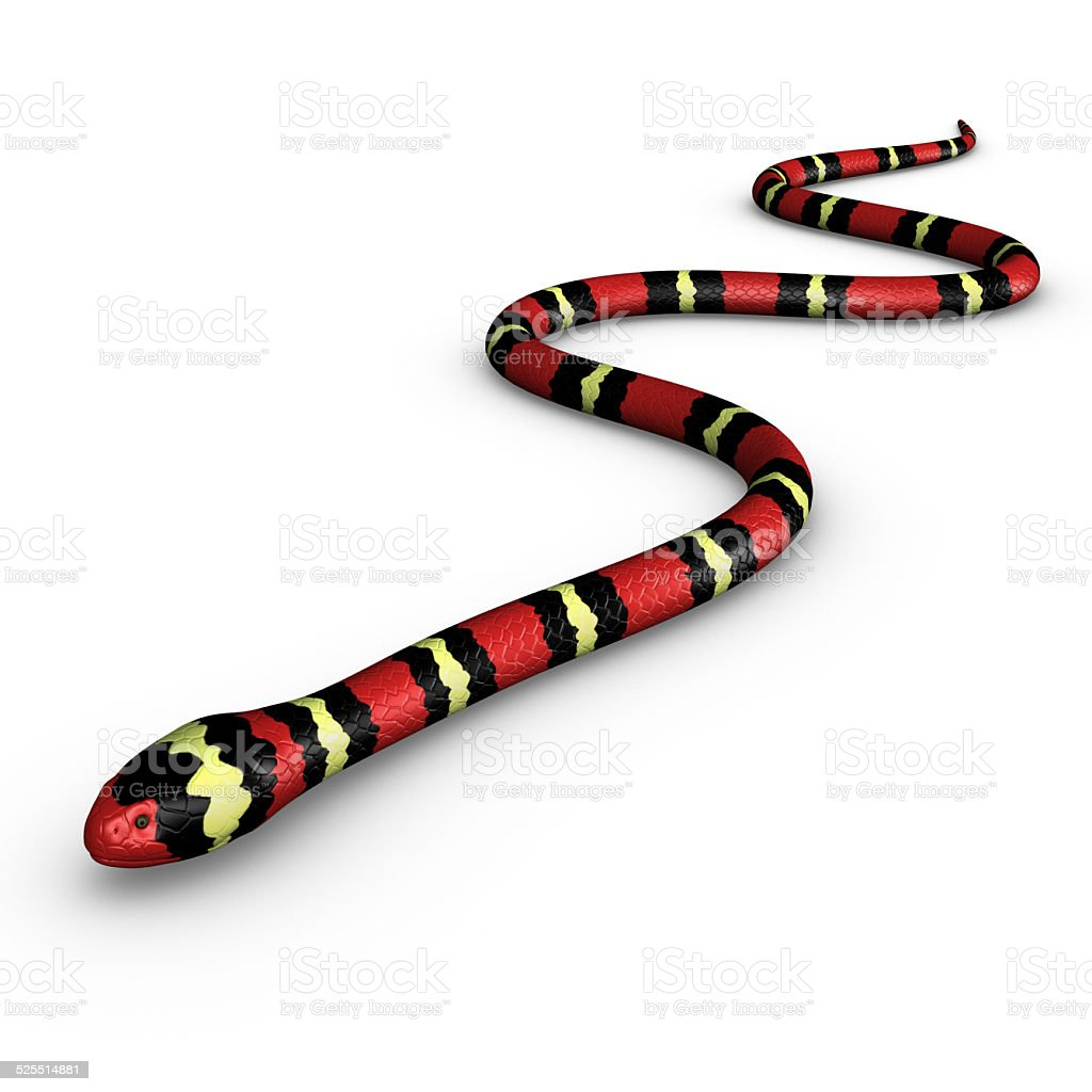Coral snake. stock photo