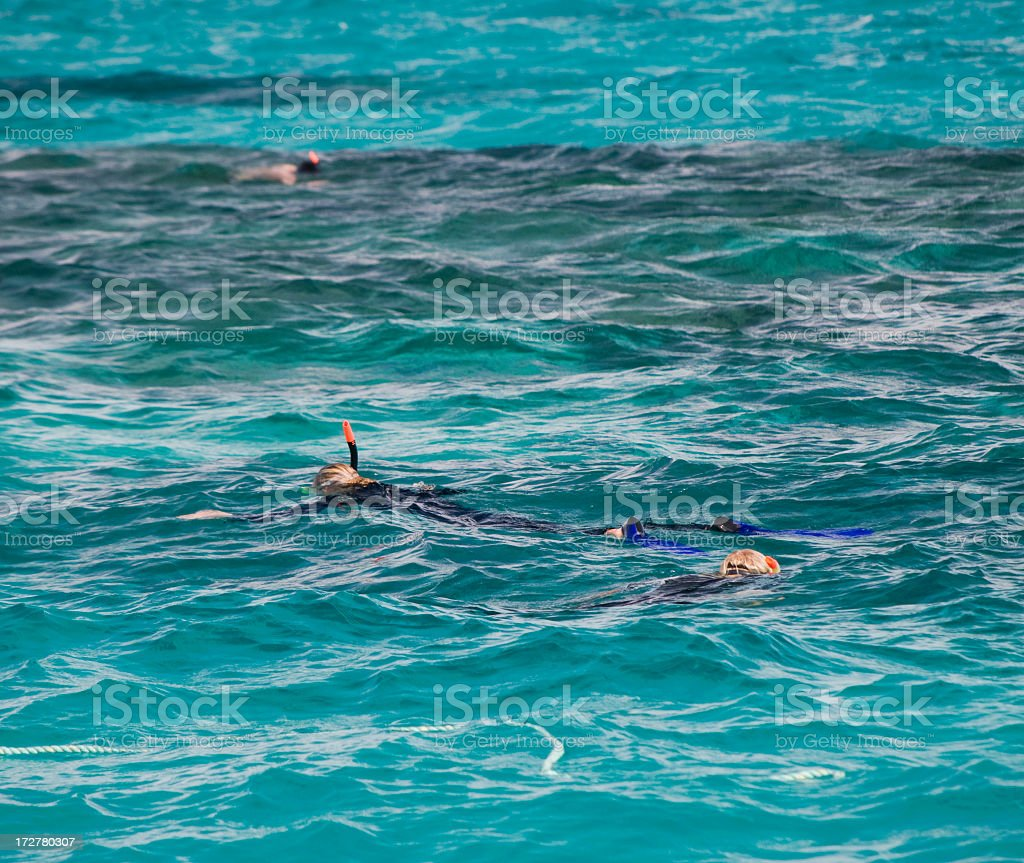Coral Snorkelling royalty-free stock photo