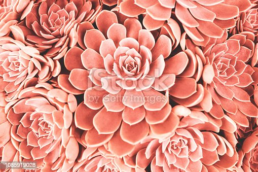 Many succulent plants background. Trendy living coral color toning. Color of the 2019 year concept.