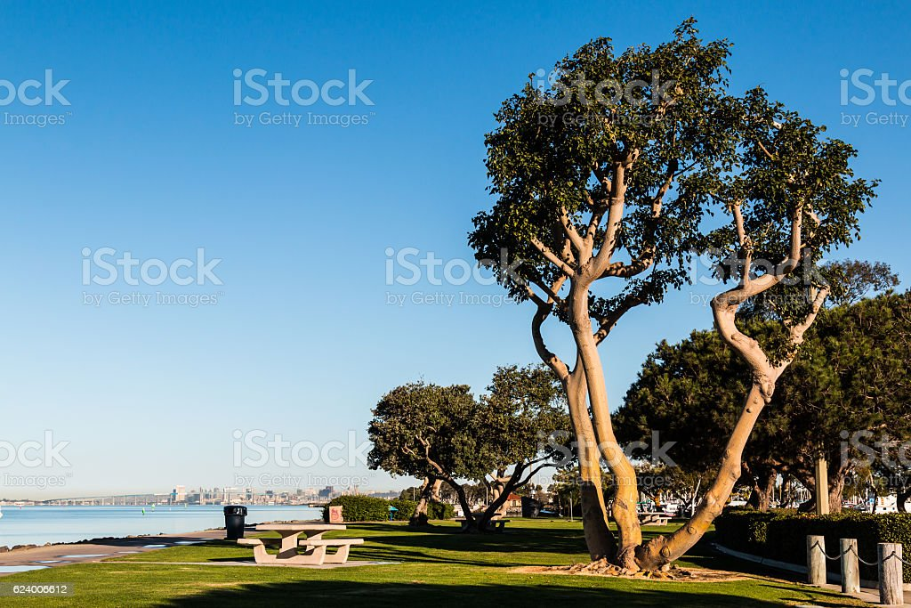Coral Trees And Picnic Tables At Chula Vista Bayfront Park