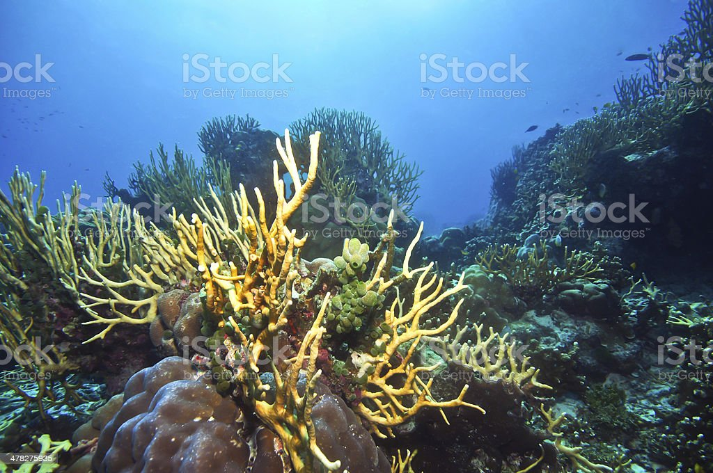 corals and bottom life stock photo