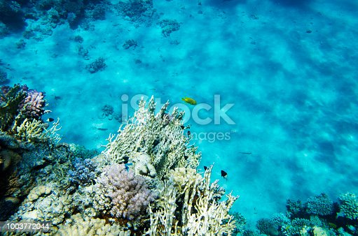 Corals and fish in the background of the sandy bottom