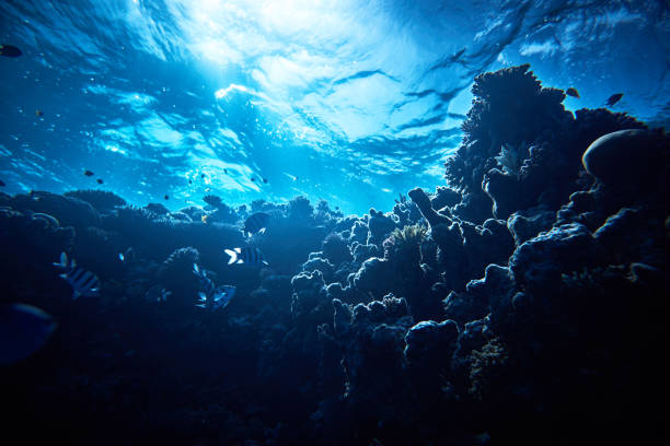 corals background - deep stock pictures, royalty-free photos & images