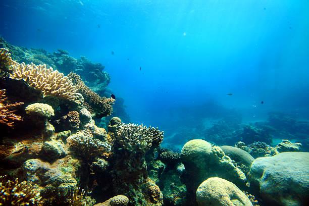 coralli in mare profondo - barriera corallina foto e immagini stock