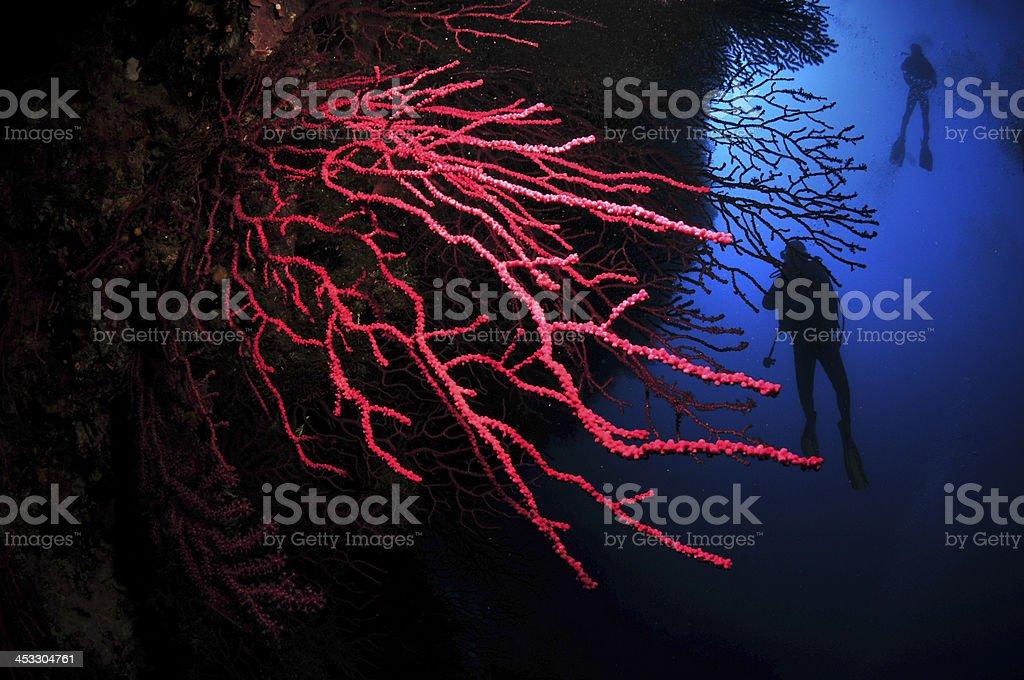 Corals in Ibiza stock photo