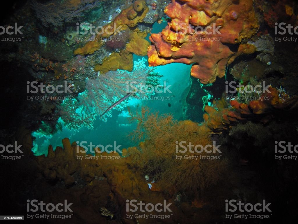 Corals in USS Liberty shipwreck stock photo