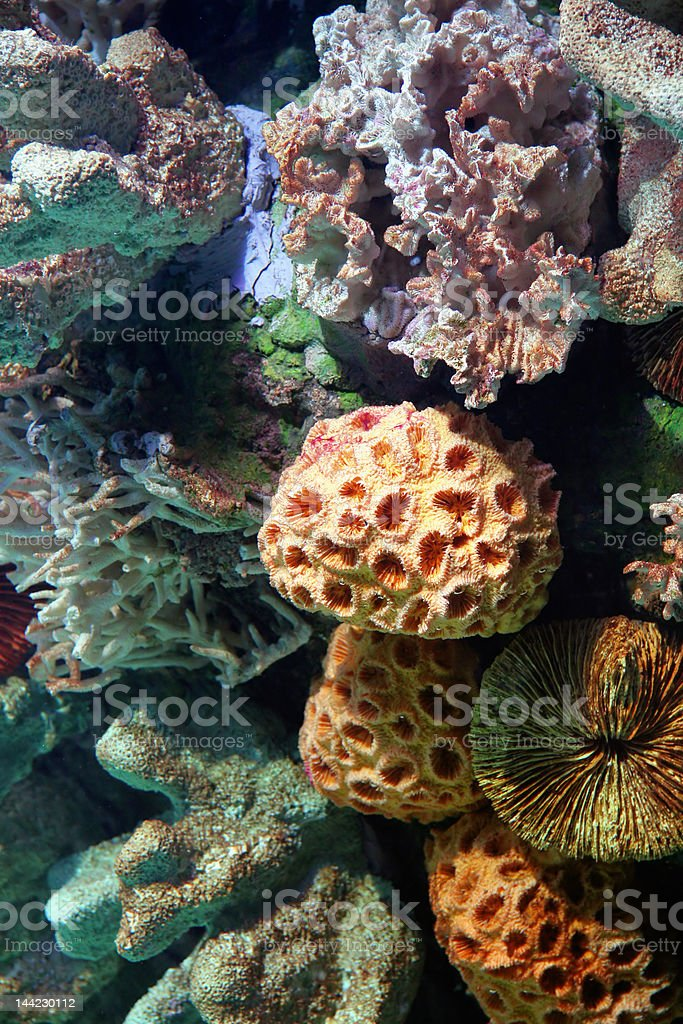 corals royalty-free stock photo