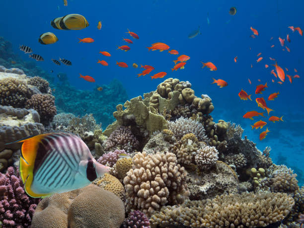 Corals reef and tropical fish stock photo