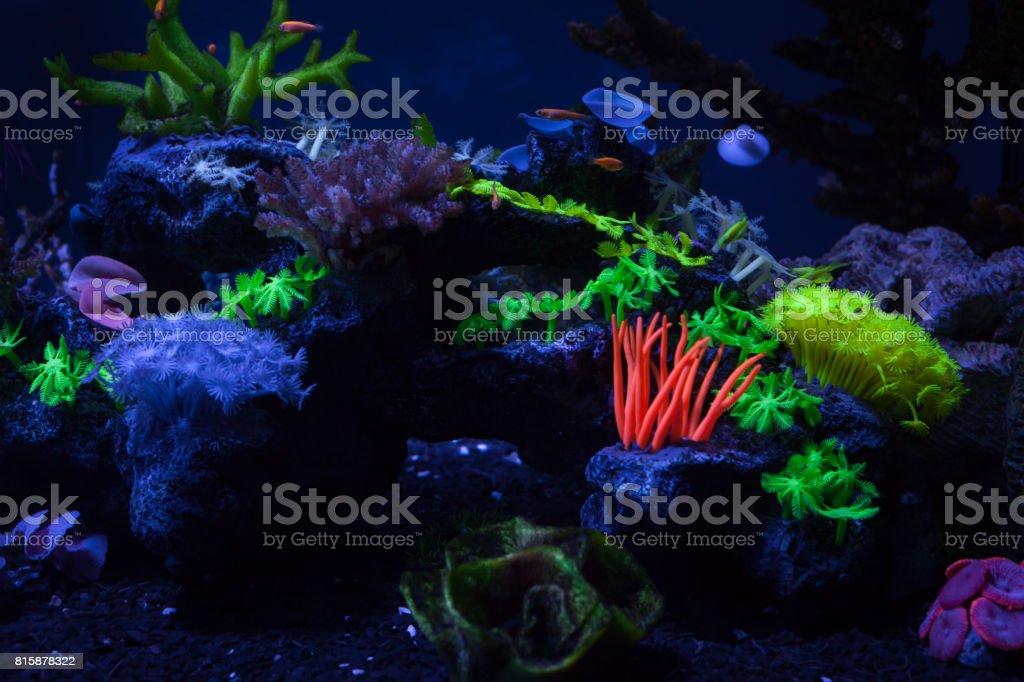 Corals under water stock photo