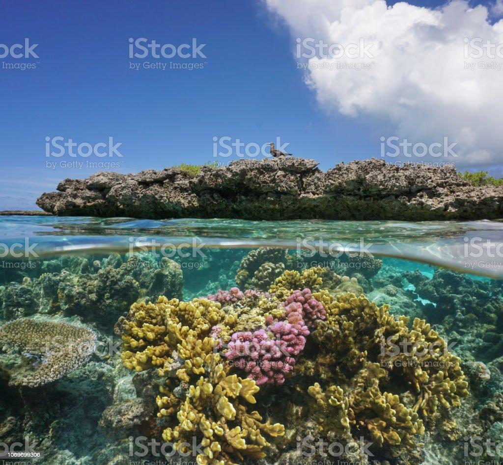 Los corales bajo el agua y el islote de arrecife con una gaviota - foto de stock