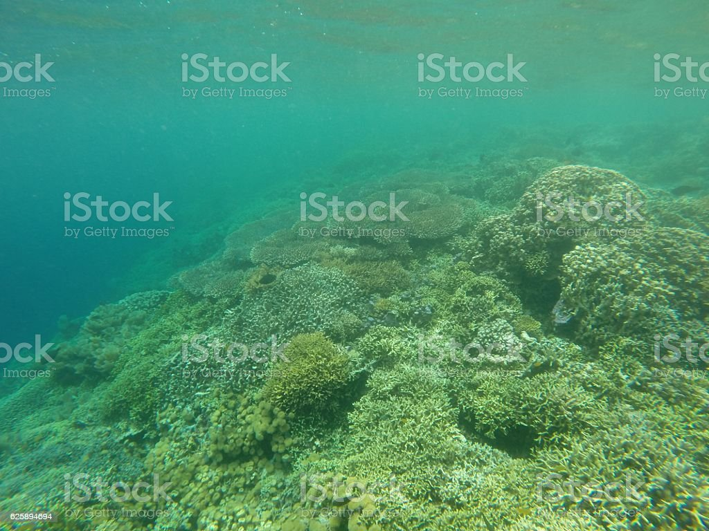 Corals underwater stock photo