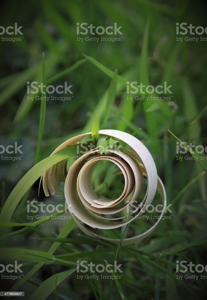 écorce de bananier enroulée dans brins d''herbe - Photo