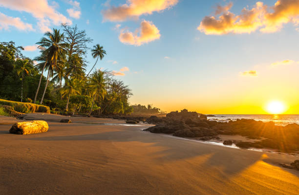 Corcovado National Park at Sunset Sunset along the beach in Corcovado National Park by the Pacific Ocean with the silhouette of tropical palm trees, Osa Peninsula, Costa Rica, Central America. limoen stock pictures, royalty-free photos & images