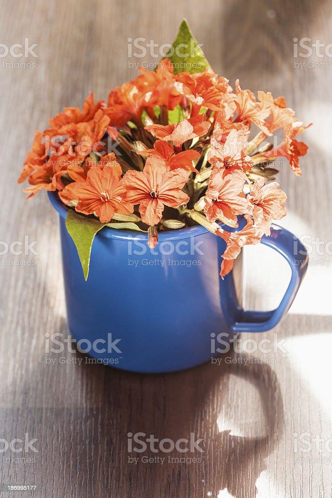 Cordia sebestena flower royalty-free stock photo