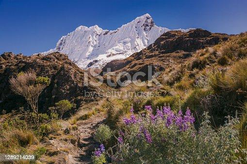 istock Cordillera Blanca: Chacraraju with hiking path and wildflowers – Ancash Andes near Huaraz, Peru 1289214039