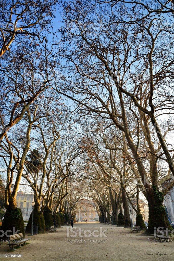 Parque de Cordoaria en Oporto - foto de stock