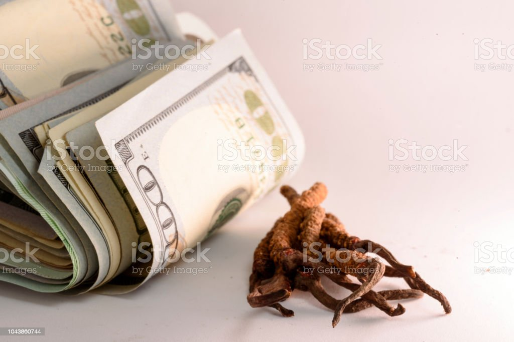 Cordyceps Is Chinese And Money Stock Photo - Download Image Now