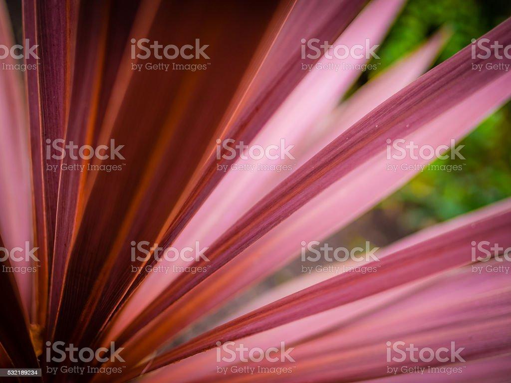 Cordyline flower stock photo