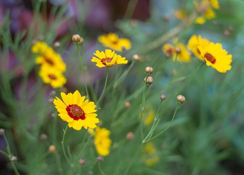 Beautiful flowers blooming in the subtropics of Okinawa