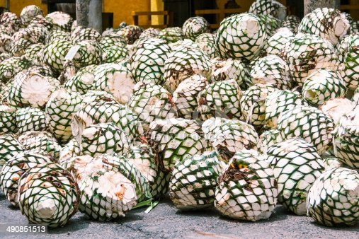 The cores of Tequilana Weber, or Blue agave, the plant used for tequila production, after cutting the leaves for the distillation process, at a distillery in the town of Tequila, Mexico