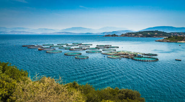 corfu circles - aquaculture stock pictures, royalty-free photos & images