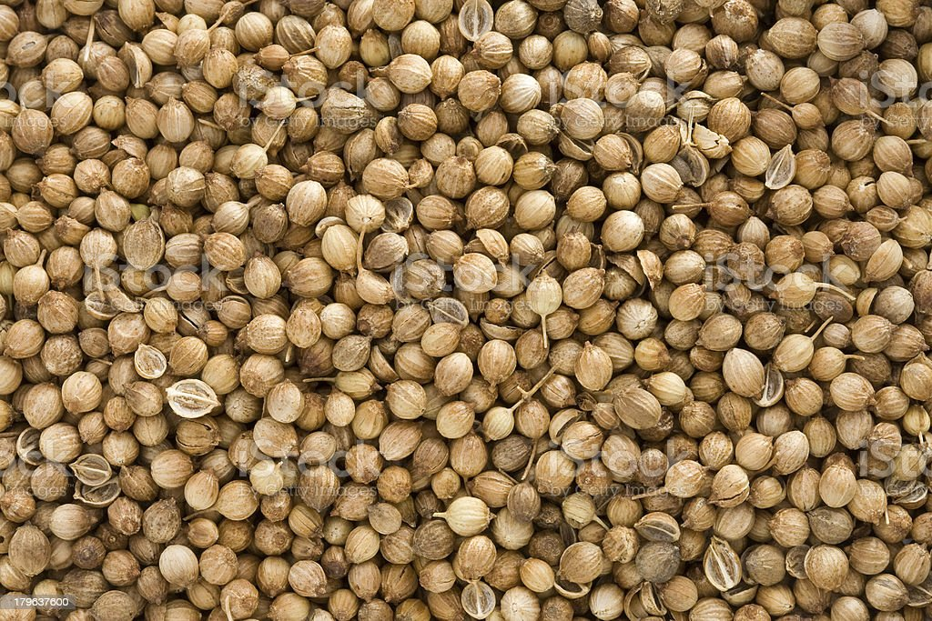 Coriander as whole background royalty-free stock photo