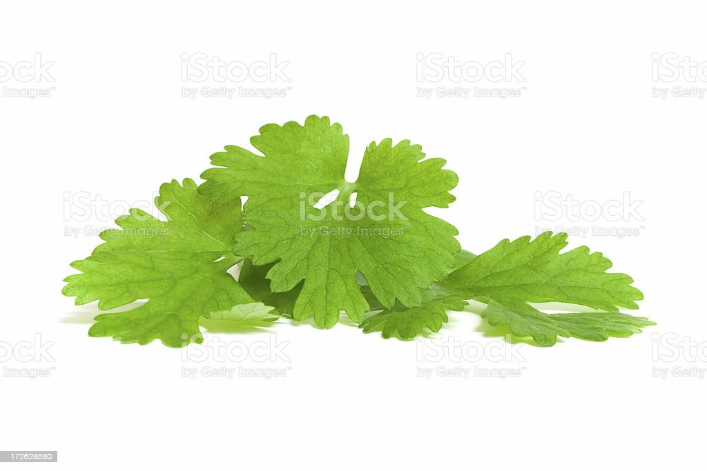 Coriander Display stock photo