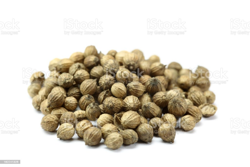 coriander (coriandrum sativum) isolated on white stock photo