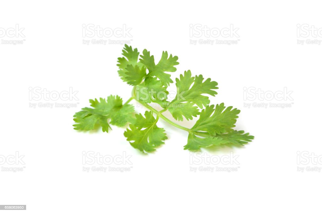 Coriander leaves on white background - isolated stock photo