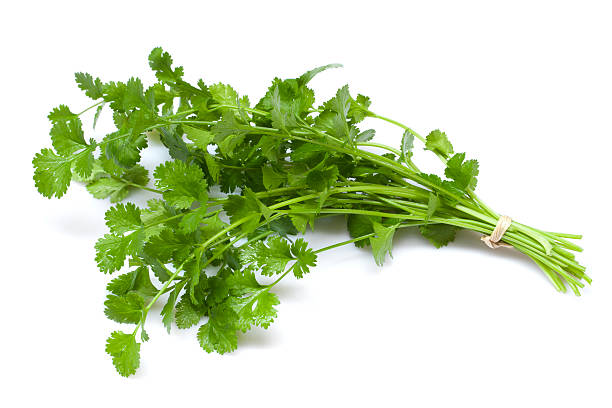 coriander - parsley stock photos and pictures