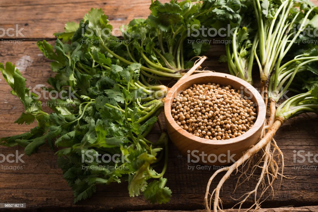 Coriander seeds and leaves on a wood background royalty-free stock photo