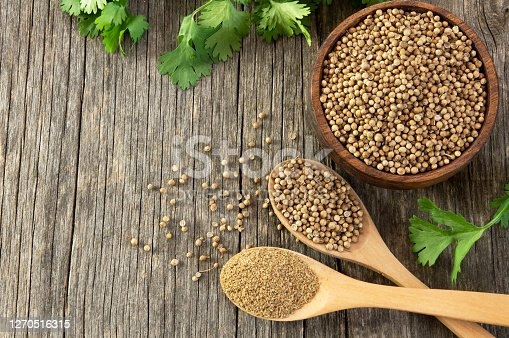 coriander seeds and powder in wooden spoon with fresh cilantro leaves on wooden table, ( coriandrum sativum )