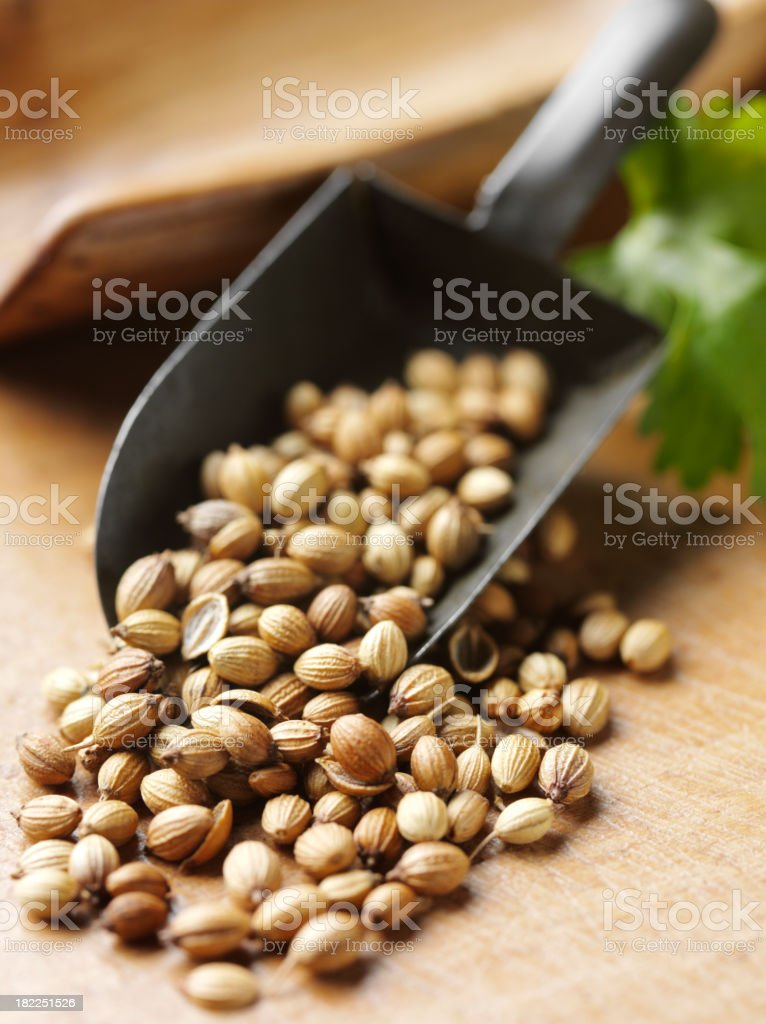 Coriander Seeds in a Metal Scoop royalty-free stock photo