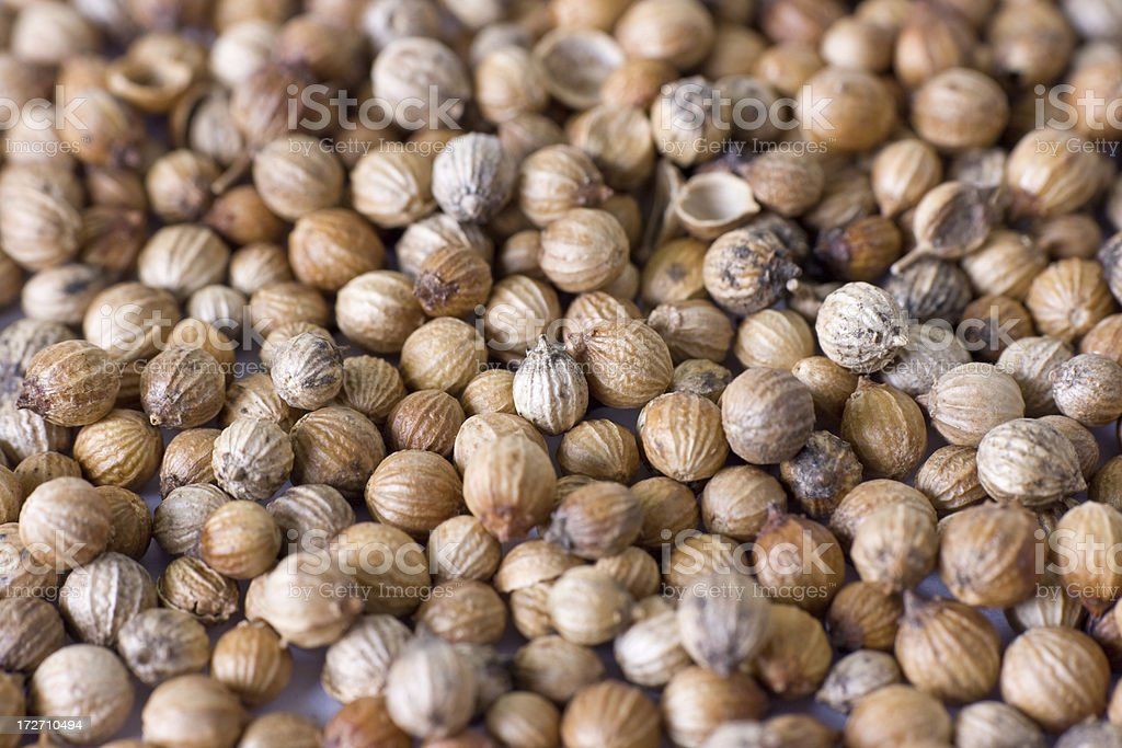 Coriander seeds stock photo