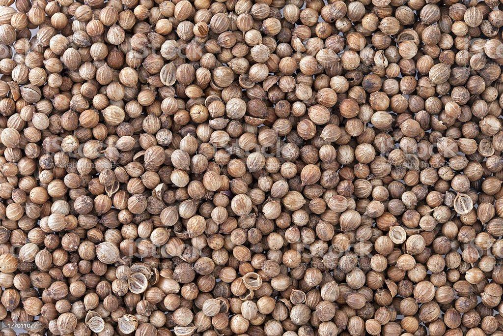 Coriander Seeds (Coriandrum sativum) texture background. royalty-free stock photo