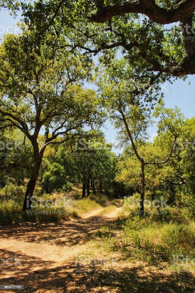 Cork oak forest in Arrabida Mountains - Zbiór zdjęć royalty-free (Anioł)