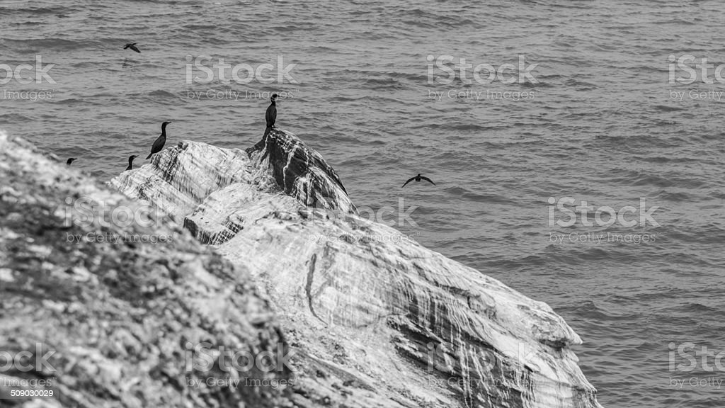 Cormorant and seagulls sitting on a rock near the sea. royalty-free stock photo