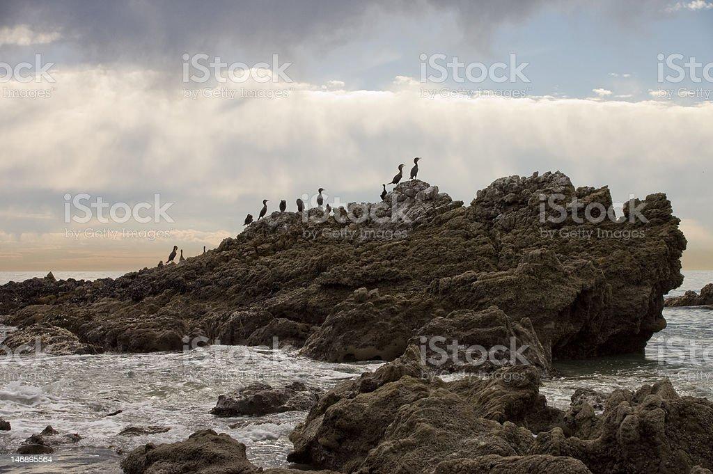 Cormorant birds on coastal rocks stock photo