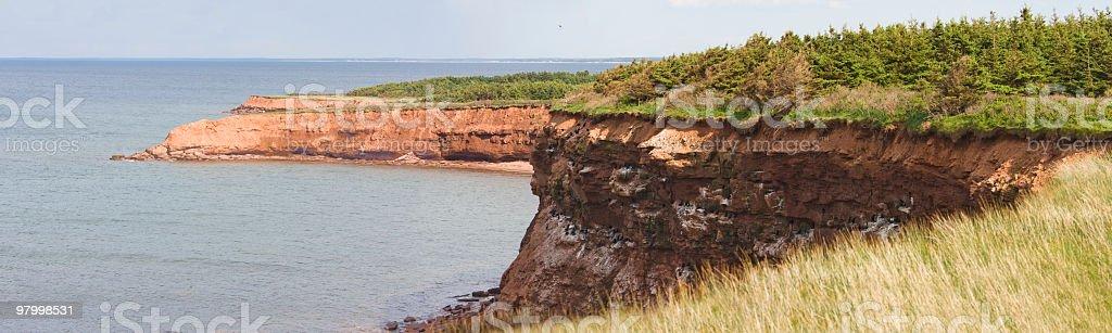 Cormorant Nesting Site Panorama royalty-free stock photo