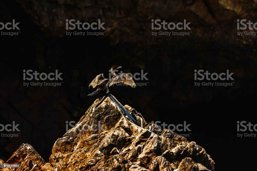 Cormorant spreading its wings in the Islas Ballestas, Paracas Peninsula, Peru stock photo