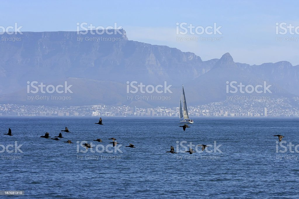 Corvos-marinhos na frente da Cidade do Cabo - foto de acervo