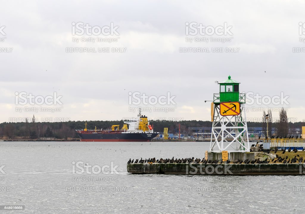 Cormorants in the Harbor stock photo