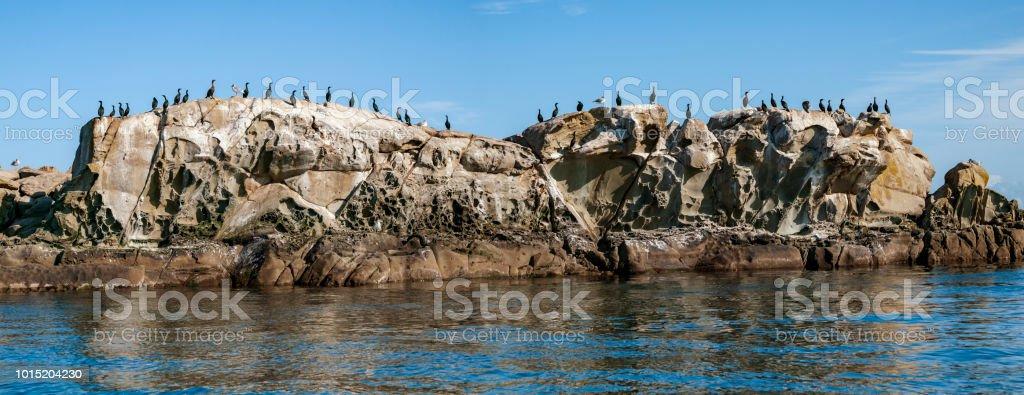 Cormorants on rock islet in southern British Columbia. stock photo