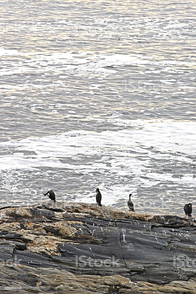 Cormorants on rocks at Pemaquid Point Maine stock photo