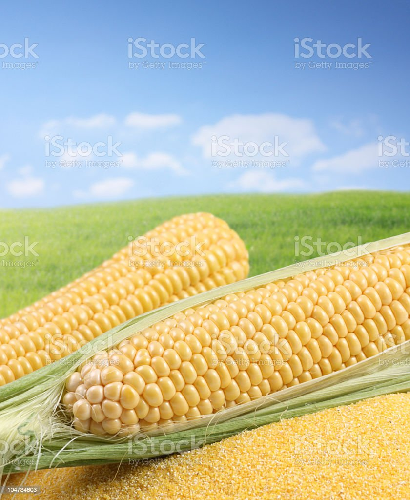 Corn and flour against green field. royalty-free stock photo