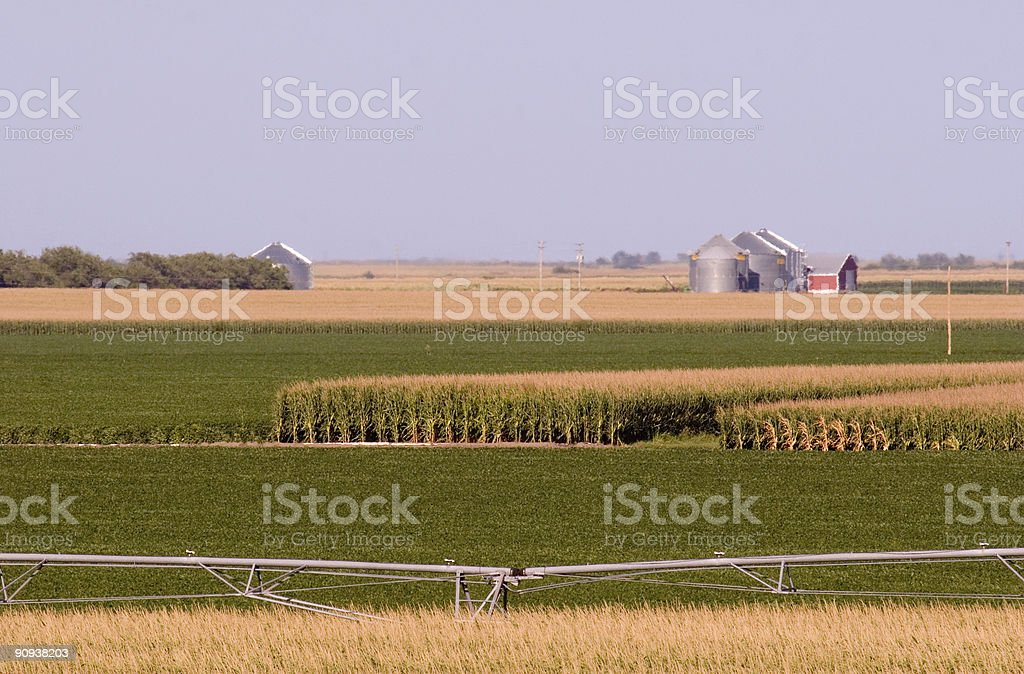 Corn and Soy Fields royalty-free stock photo