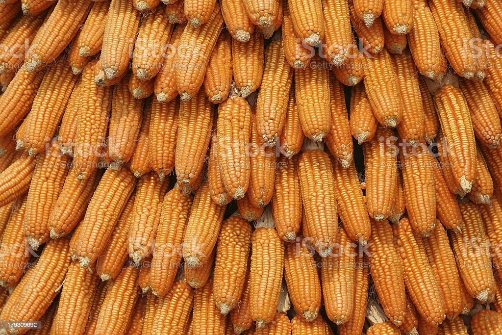 Corn Background royalty-free stock photo