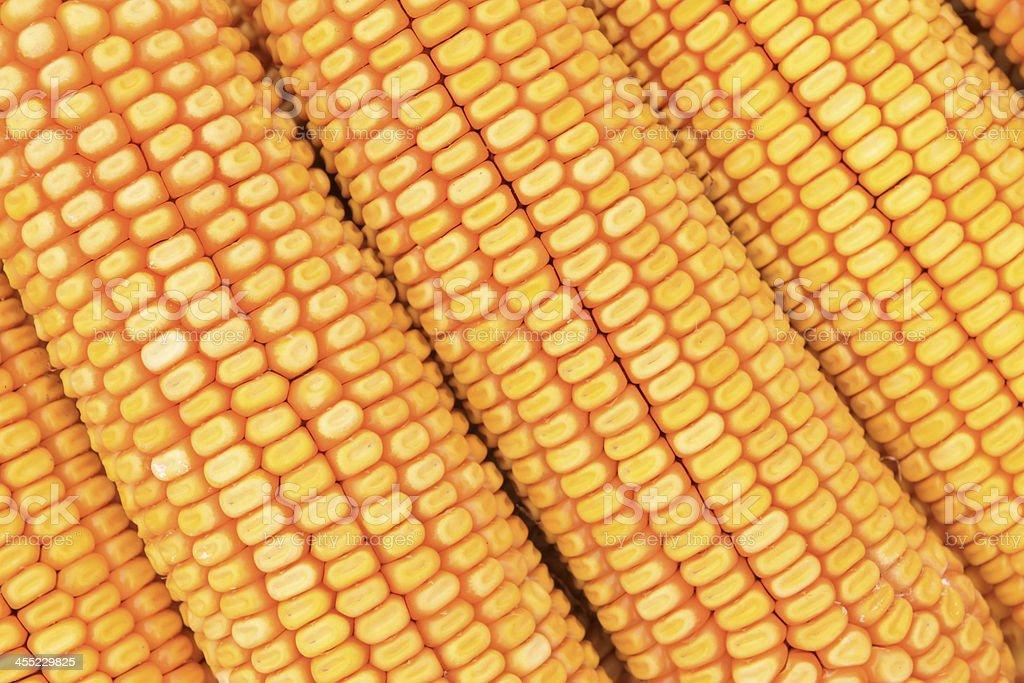 corn bonzi stock photo