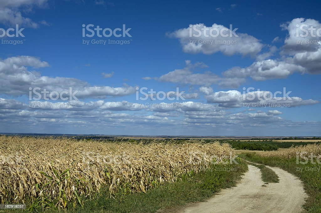 Corn & clouds royalty-free stock photo