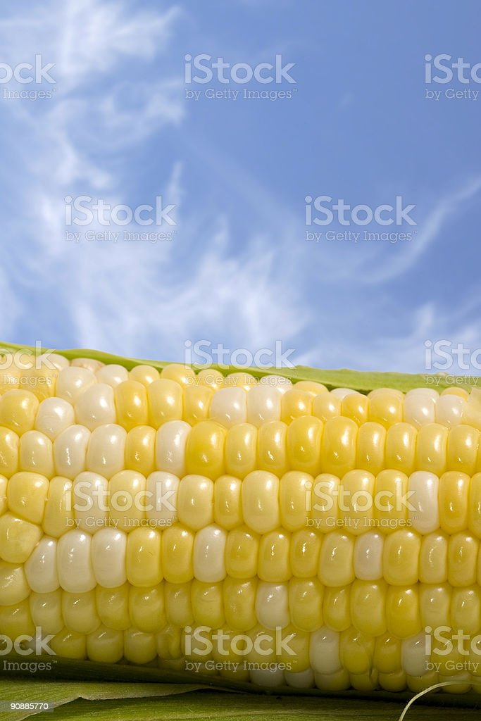 Corn Cob and Blue Sky royalty-free stock photo